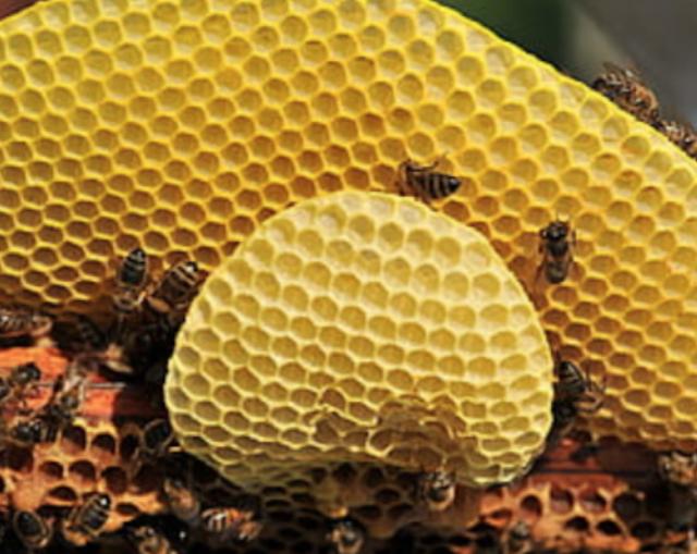 Hire A Bee Exterminator Miami